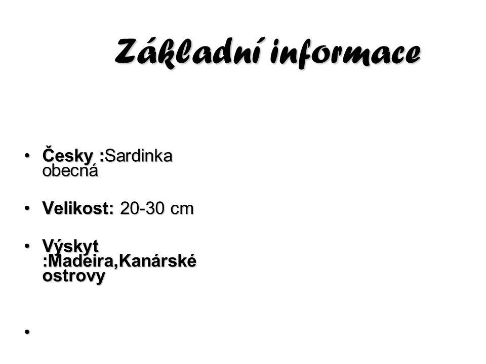 Základní informace Česky :Sardinka obecná Velikost: 20-30 cm