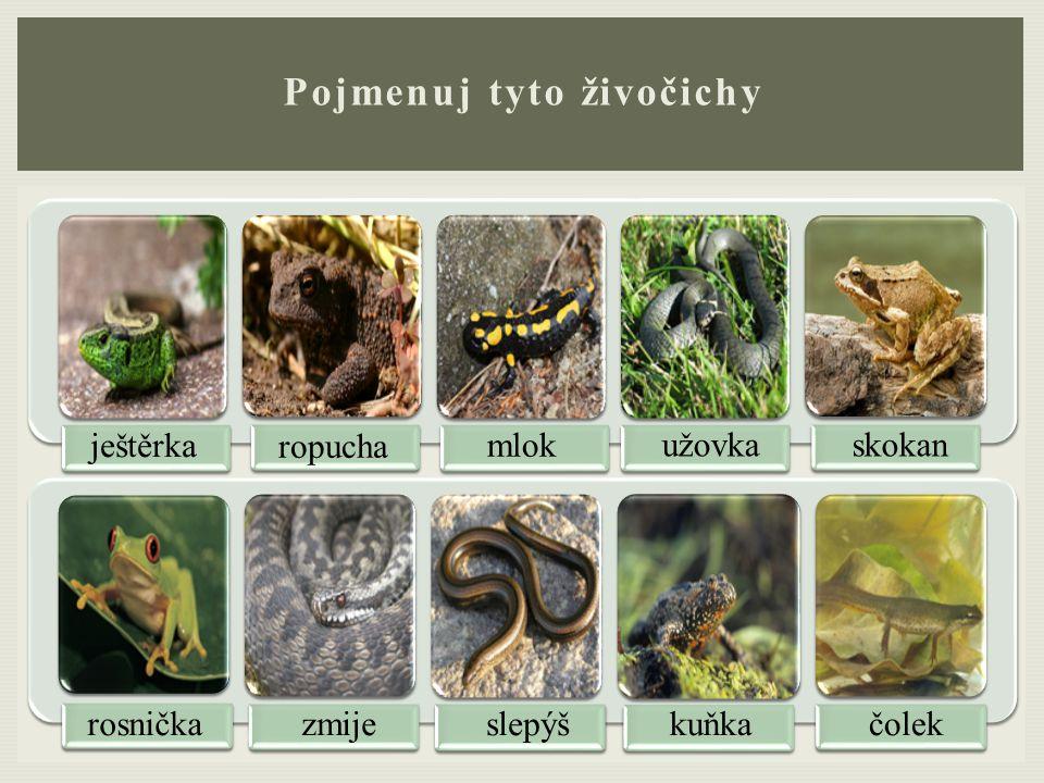 Pojmenuj tyto živočichy