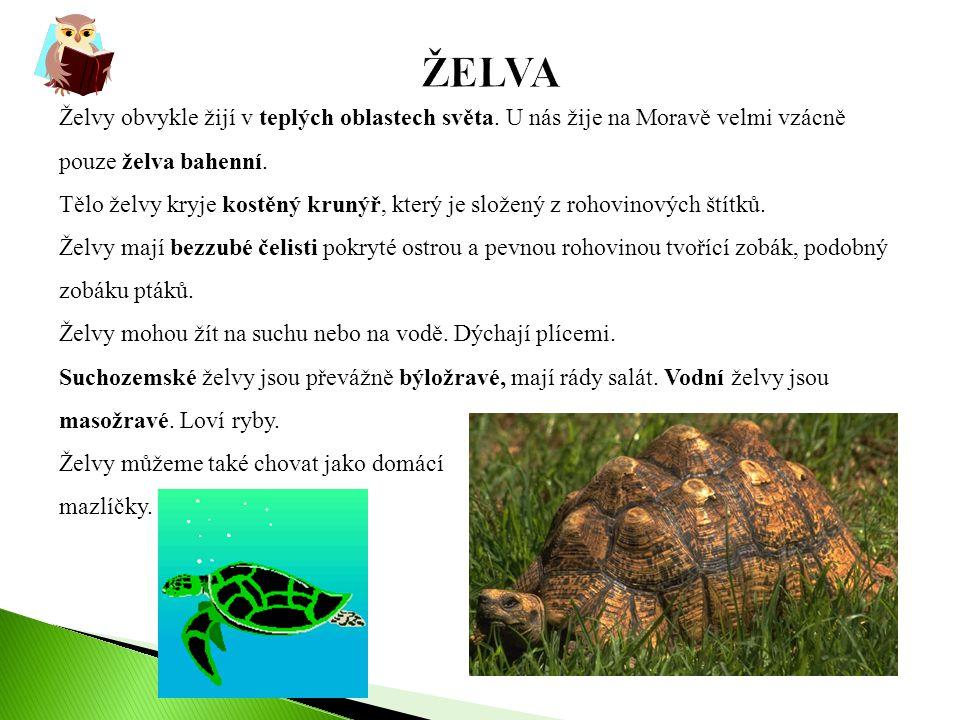 ŽELVA Želvy obvykle žijí v teplých oblastech světa. U nás žije na Moravě velmi vzácně pouze želva bahenní.