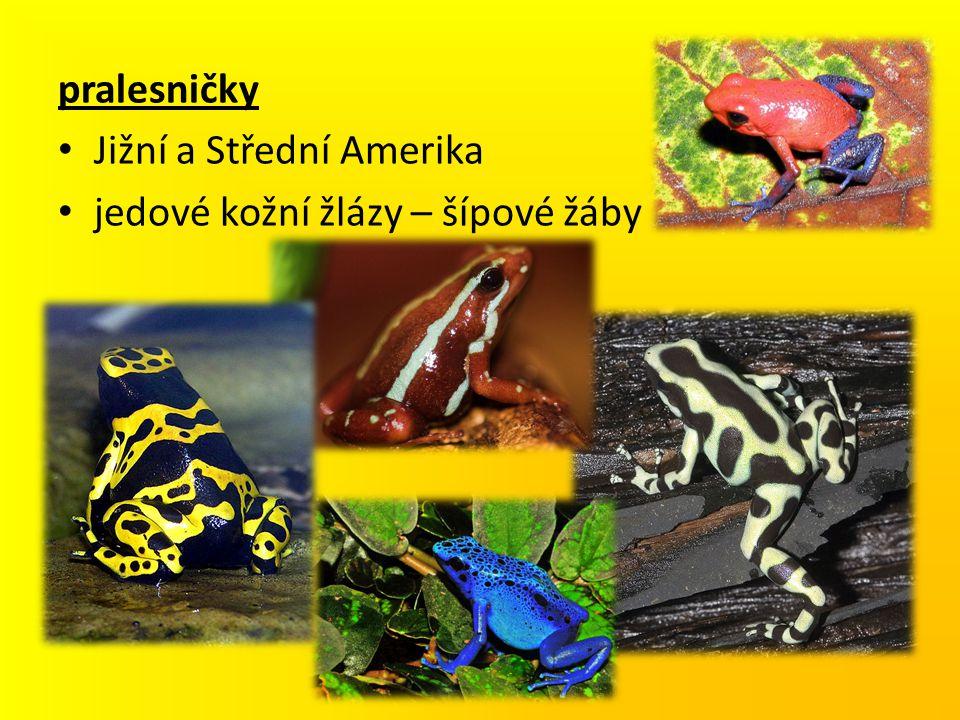 pralesničky Jižní a Střední Amerika jedové kožní žlázy – šípové žáby