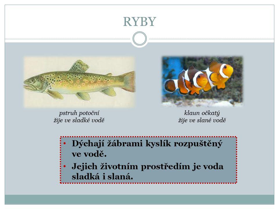 RYBY Dýchají žábrami kyslík rozpuštěný ve vodě.