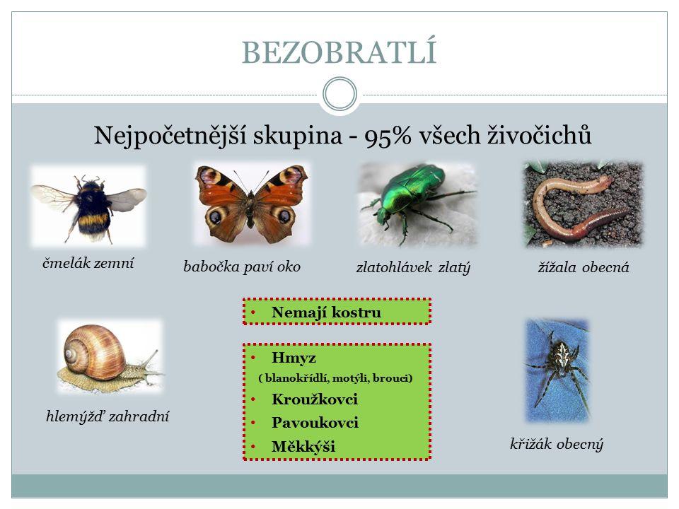 Nejpočetnější skupina - 95% všech živočichů