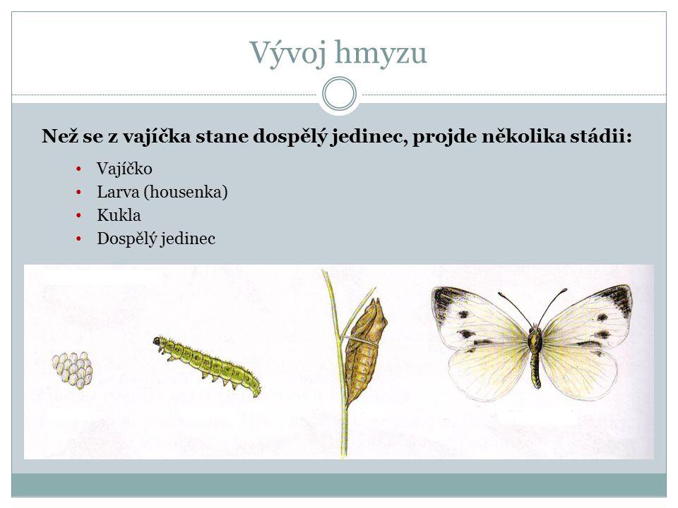 Vývoj hmyzu Než se z vajíčka stane dospělý jedinec, projde několika stádii: Vajíčko. Larva (housenka)
