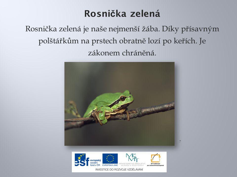 Rosnička zelená Rosnička zelená je naše nejmenší žába. Díky přísavným polštářkům na prstech obratně lozí po keřích. Je zákonem chráněná.