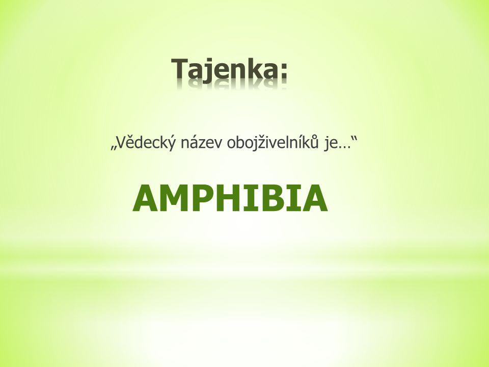 """Tajenka: """"Vědecký název obojživelníků je… AMPHIBIA"""
