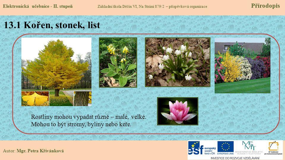 13.1 Kořen, stonek, list Rostliny mohou vypadat různě – malé, velké.