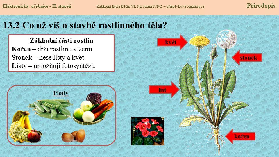13.2 Co už víš o stavbě rostlinného těla