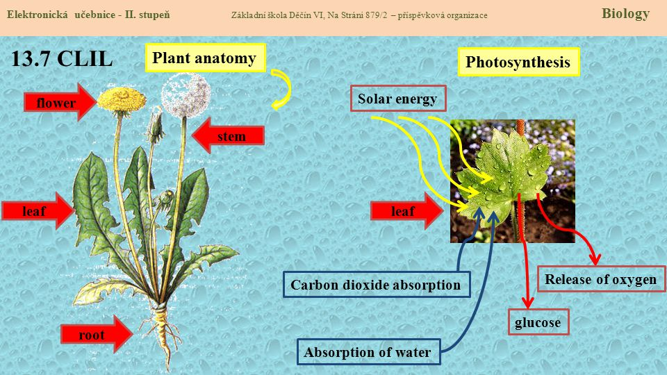 13.7 CLIL Plant anatomy Photosynthesis flower Solar energy stem leaf