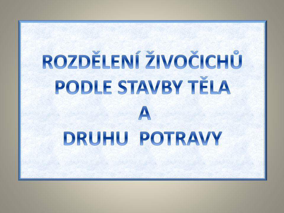ROZDĚLENÍ ŽIVOČICHŮ PODLE STAVBY TĚLA A DRUHU POTRAVY