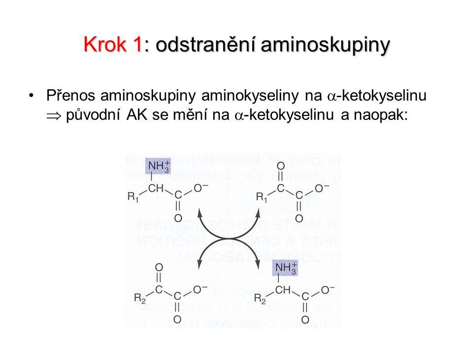 Krok 1: odstranění aminoskupiny