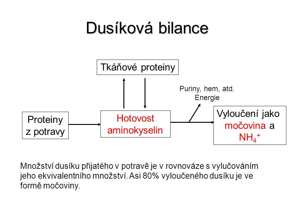Hotovost aminokyselin
