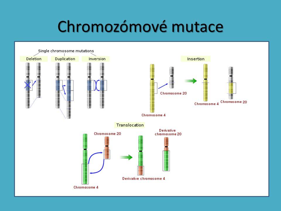 Chromozómové mutace