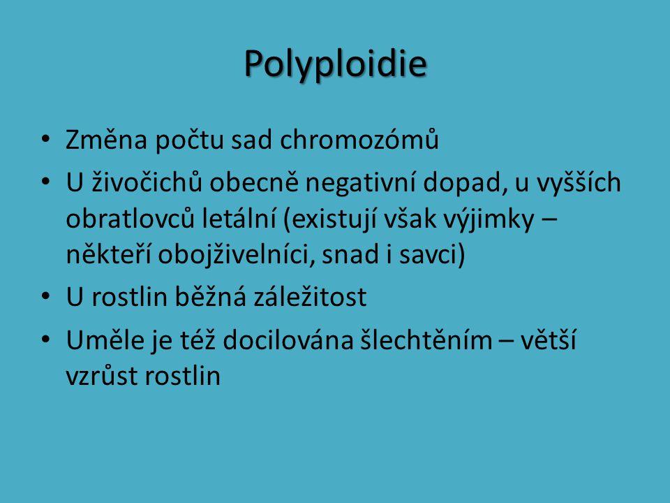 Polyploidie Změna počtu sad chromozómů