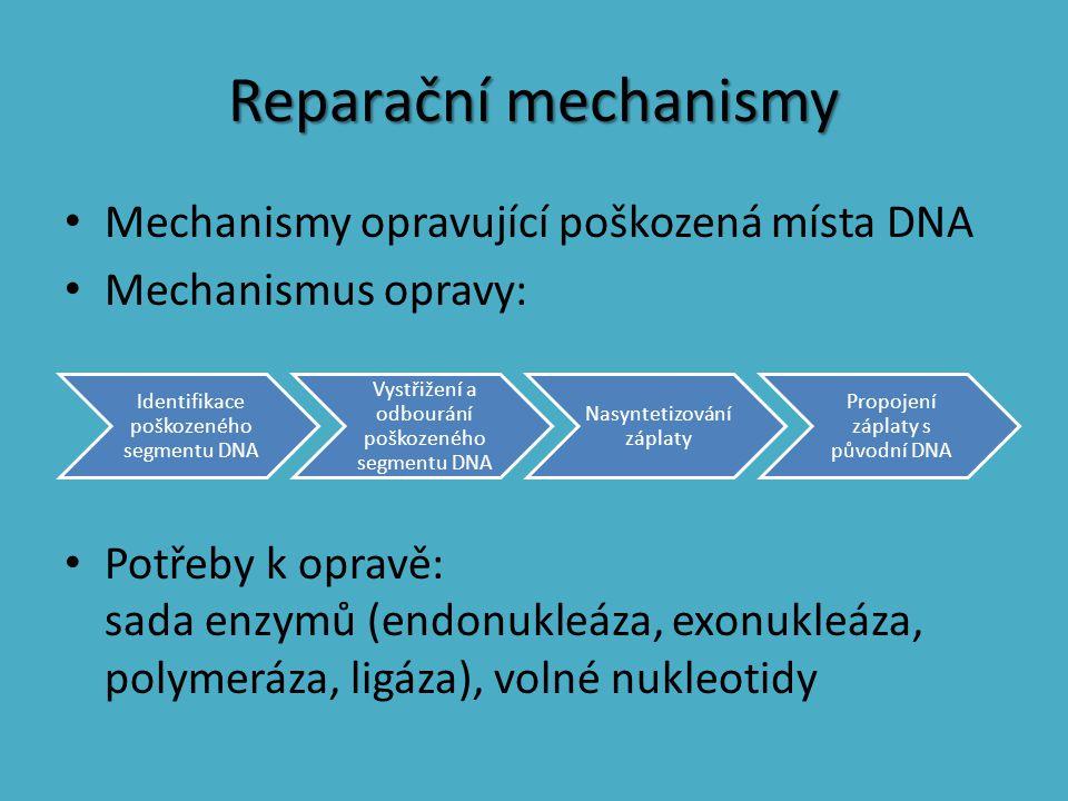 Reparační mechanismy Mechanismy opravující poškozená místa DNA