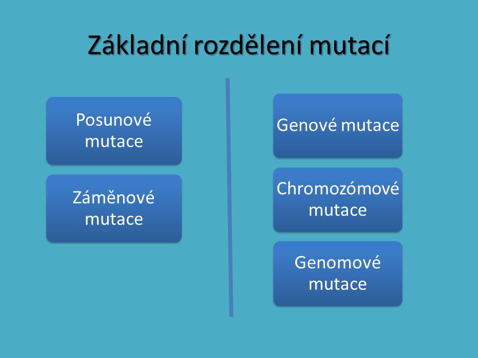 Základní rozdělení mutací