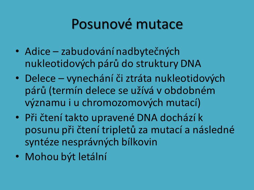 Posunové mutace Adice – zabudování nadbytečných nukleotidových párů do struktury DNA.