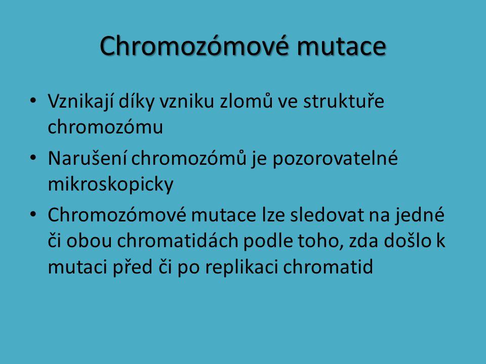 Chromozómové mutace Vznikají díky vzniku zlomů ve struktuře chromozómu