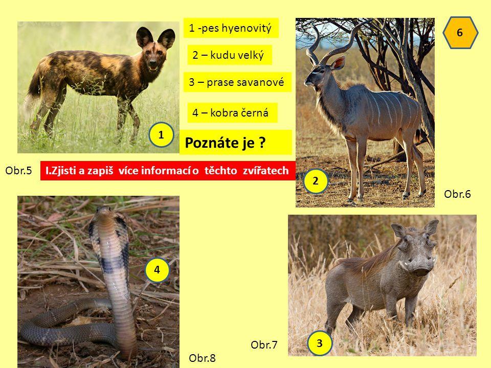 Poznáte je 1 -pes hyenovitý 6 2 – kudu velký 3 – prase savanové