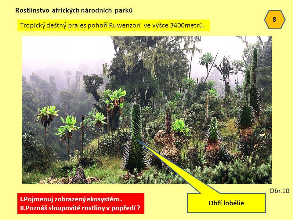 Rostlinstvo afrických národních parků
