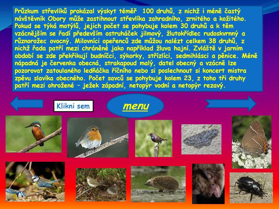 Průzkum střevlíků prokázal výskyt téměř 100 druhů, z nichž i méně častý návštěvník Obory může zastihnout střevlíka zahradního, zrnitého a kožitého. Pokud se týká motýlů, jejich počet se pohybuje kolem 30 druhů a k těm vzácnějším se řadí především ostruháček jilmový, žlutokřídlec rudoskvrnný a různorožec ovocný. Milovníci opeřenců zde můžou nalézt celkem 38 druhů, z nichž řada patří mezi chráněné jako například žluva hajní. Zvláště v jarním období se zde překřikují budníčci, sýkorky, střízlíci, sedmihlásci a pěnice. Méně nápadná je červenka obecná, strakapoud malý, datel obecný a vzácně lze pozorovat zatoulaného ledňáčka říčního nebo si poslechnout si koncert mistra zpěvu slavíka obecného. Počet savců se pohybuje kolem 23, z toho tři druhy patří mezi ohrožené – ježek západní, netopýr vodní a netopýr rezavý.