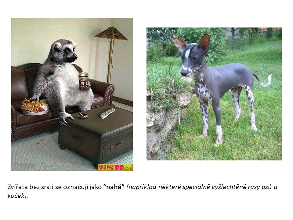 Zvířata bez srsti se označují jako nahá (například některé speciálně vyšlechtěné rasy psů a koček).