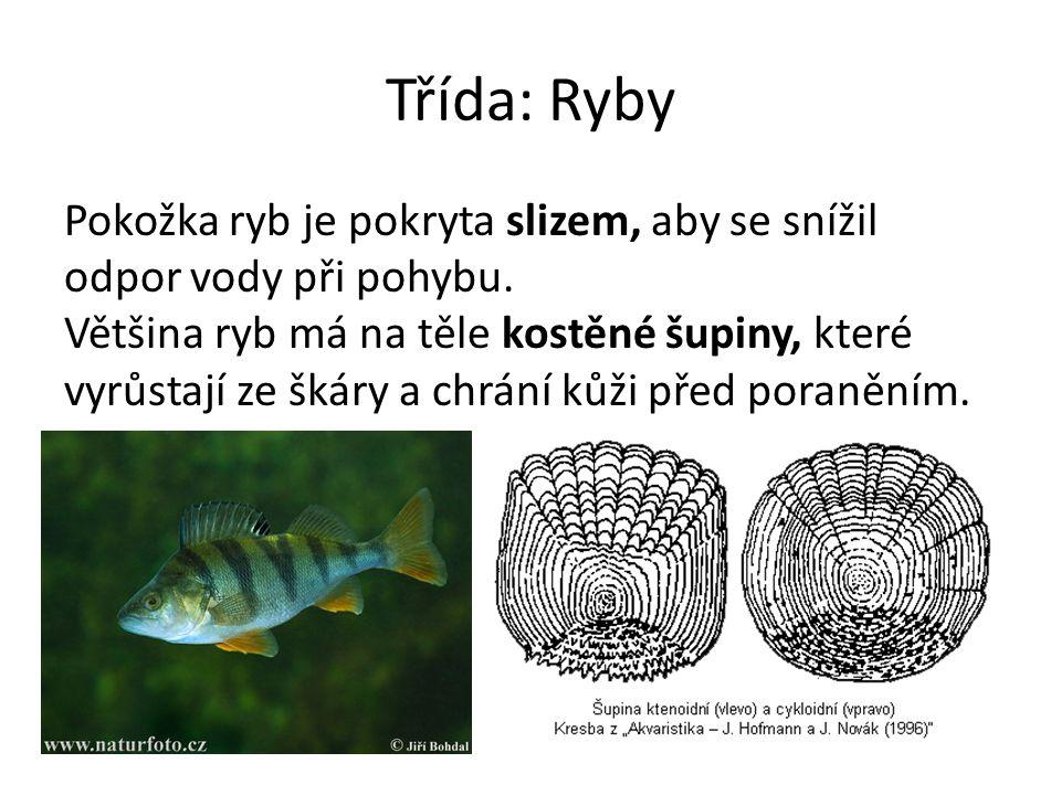 Třída: Ryby