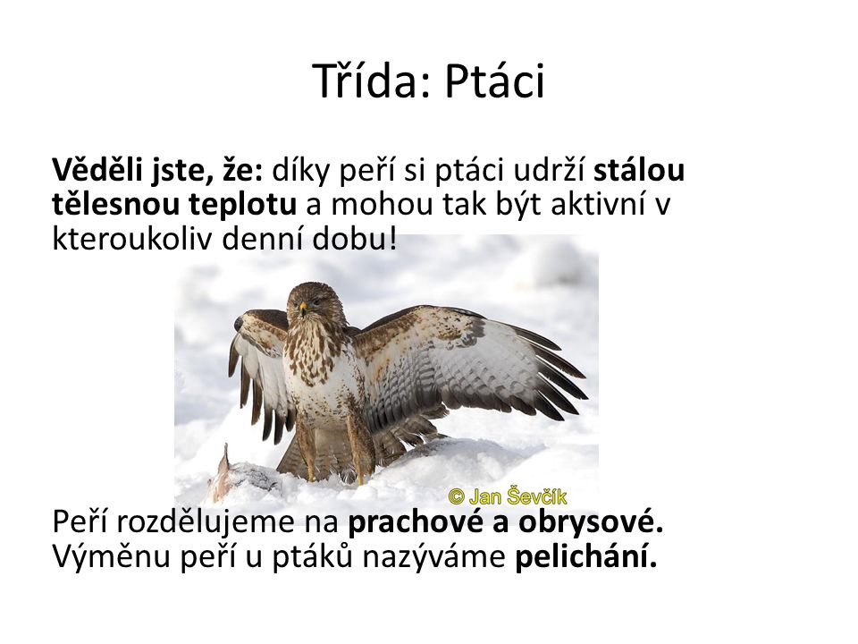 Třída: Ptáci