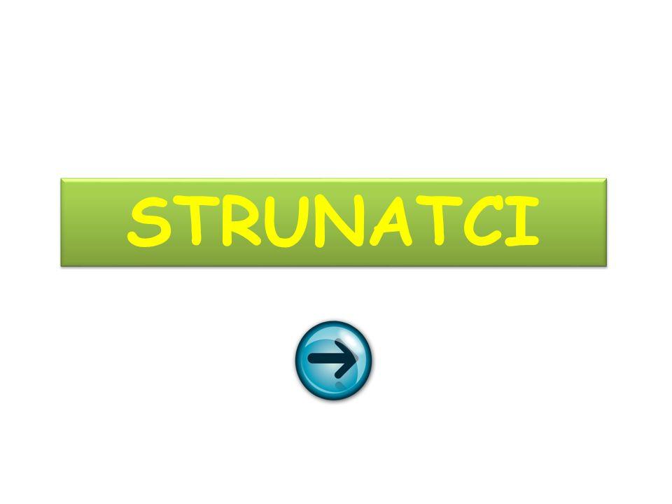 STRUNATCI