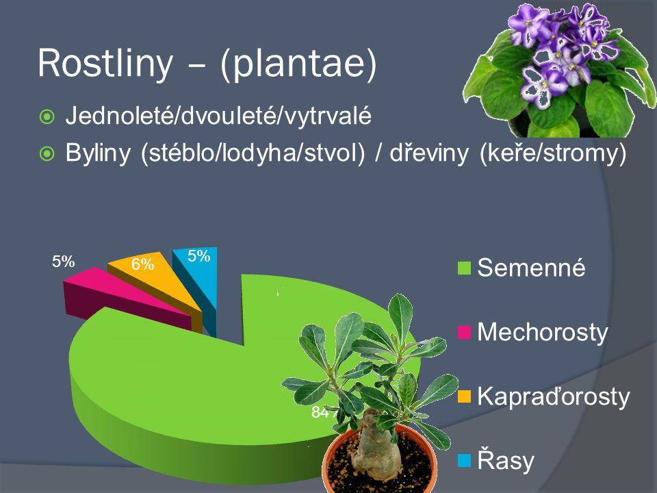 Rostliny – (plantae) Jednoleté/dvouleté/vytrvalé