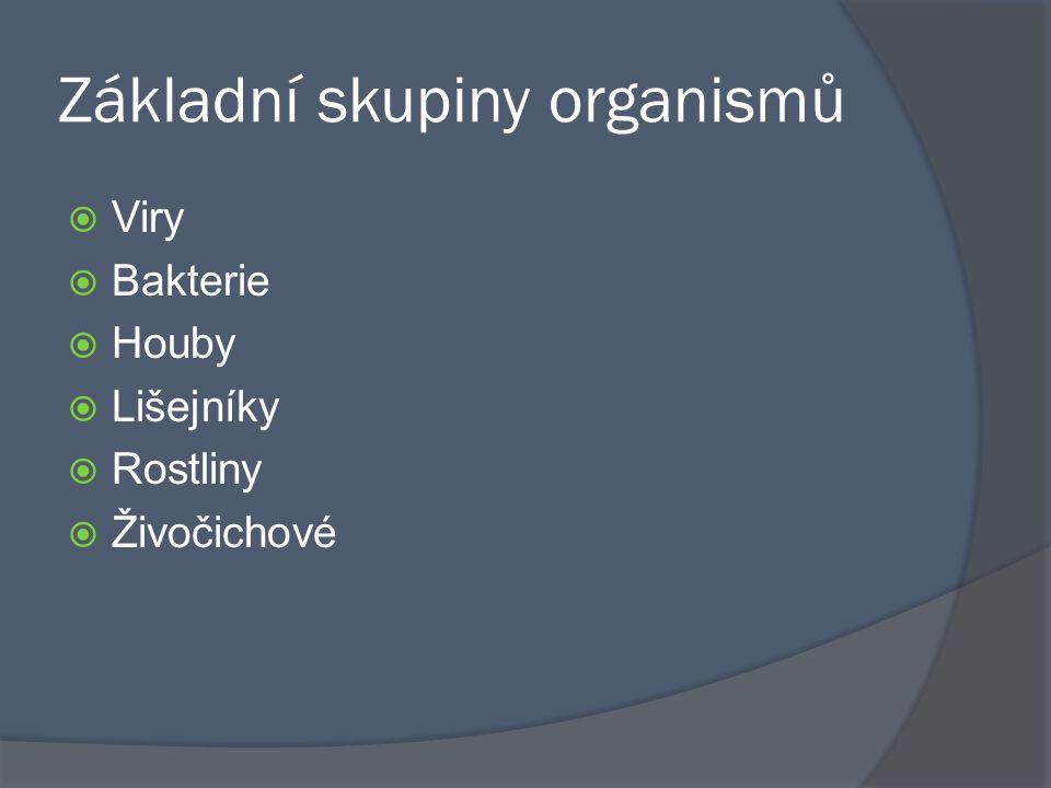 Základní skupiny organismů
