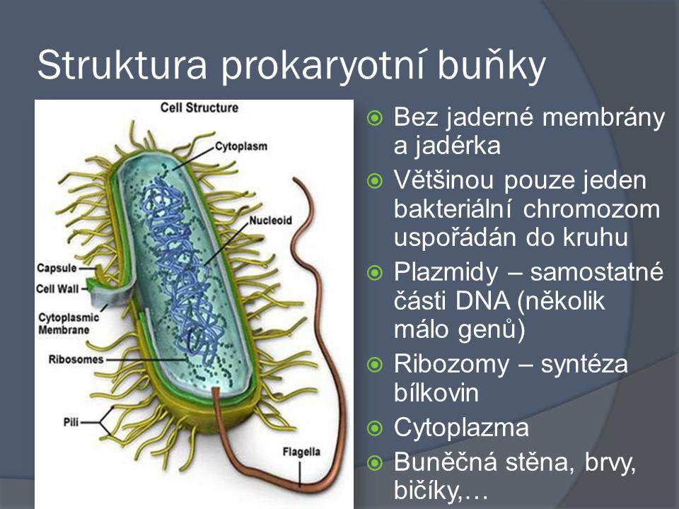 Struktura prokaryotní buňky
