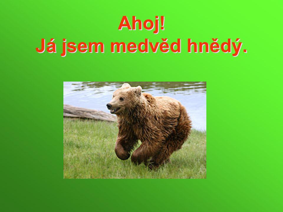 Ahoj! Já jsem medvěd hnědý.
