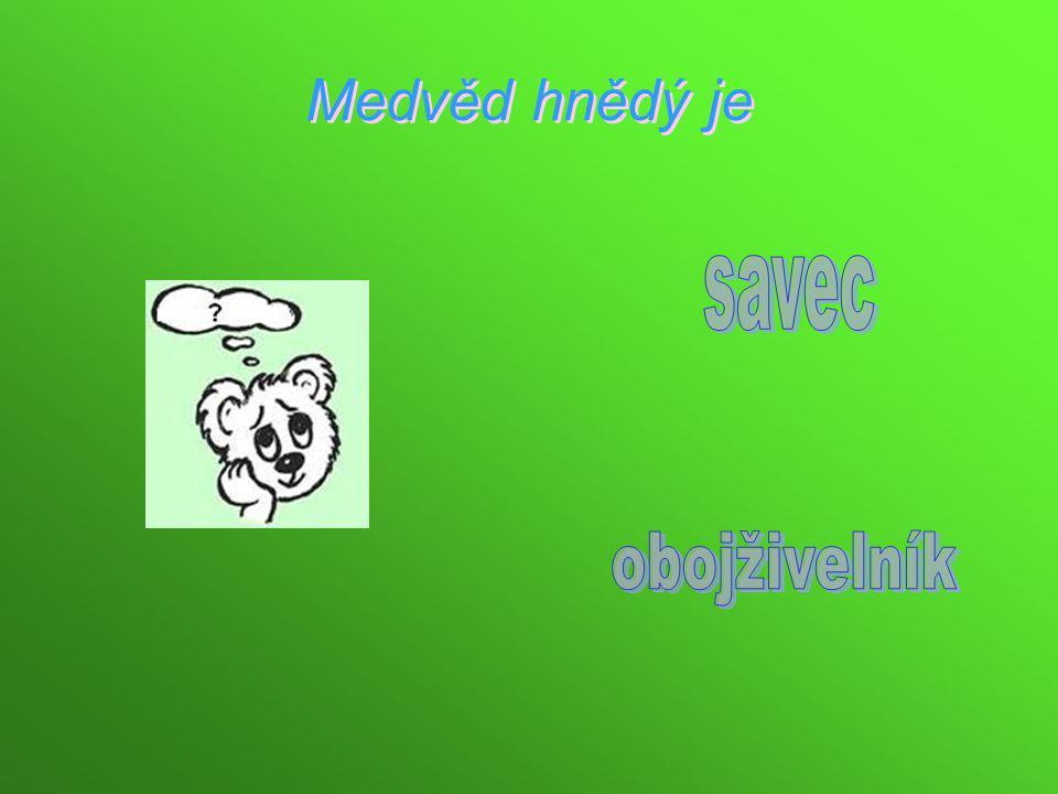 Medvěd hnědý je savec obojživelník