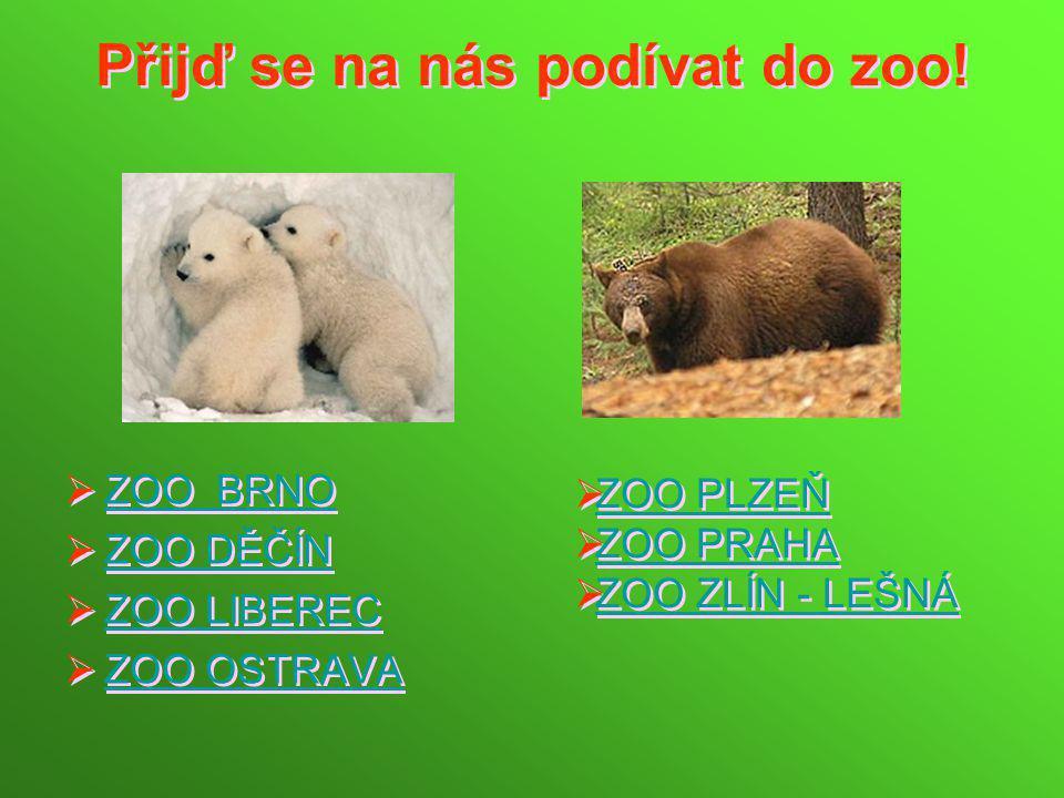 Přijď se na nás podívat do zoo!