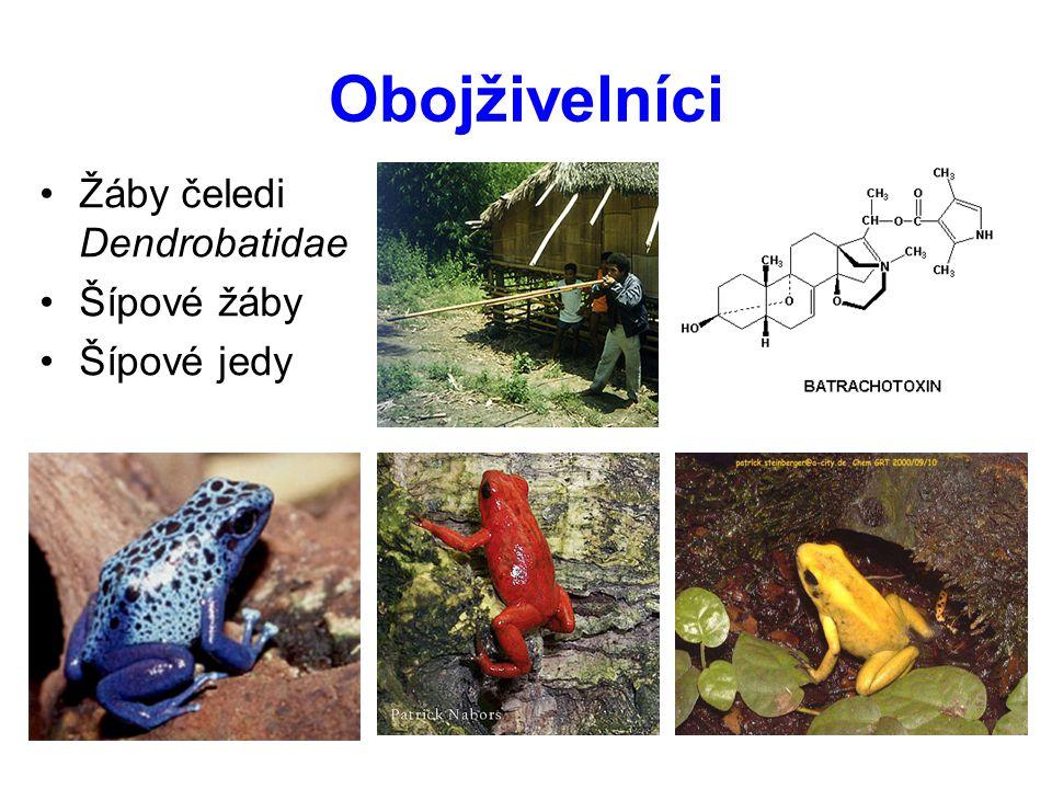 Obojživelníci Žáby čeledi Dendrobatidae Šípové žáby Šípové jedy