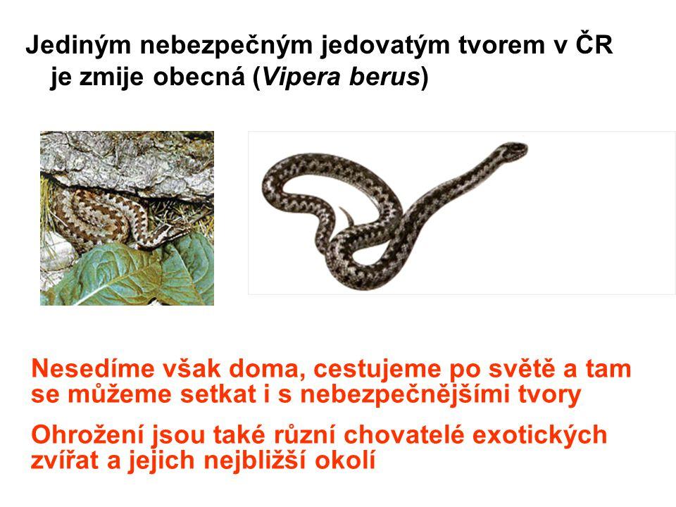 Jediným nebezpečným jedovatým tvorem v ČR je zmije obecná (Vipera berus)