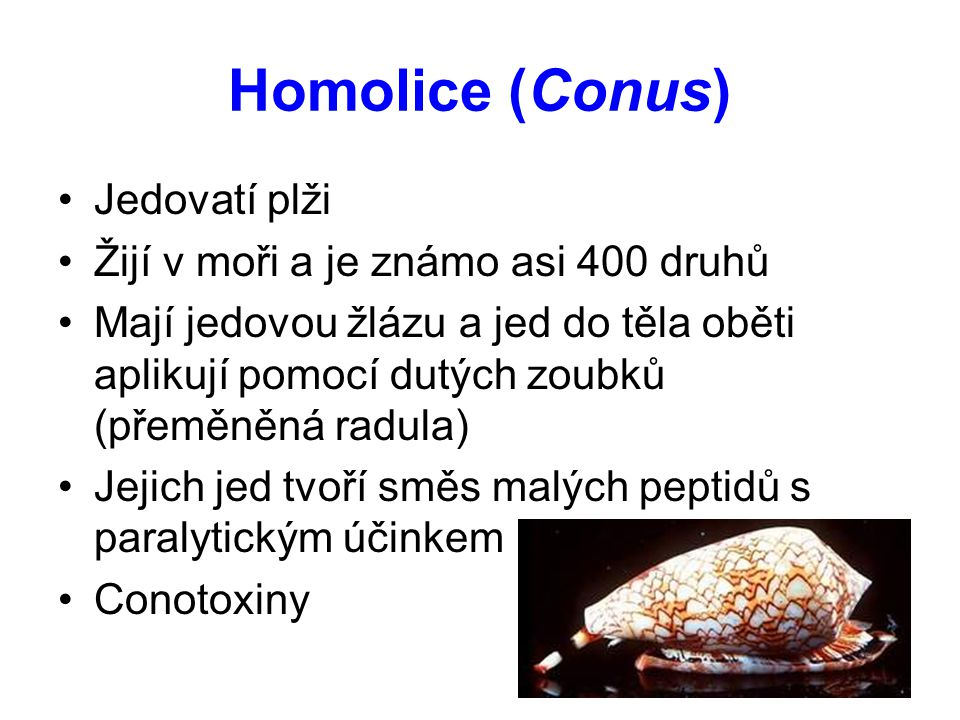 Homolice (Conus) Jedovatí plži Žijí v moři a je známo asi 400 druhů