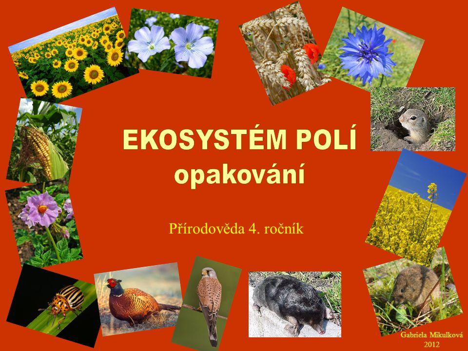 EKOSYSTÉM POLÍ opakování Přírodověda 4. ročník Gabriela Mikulková 2012