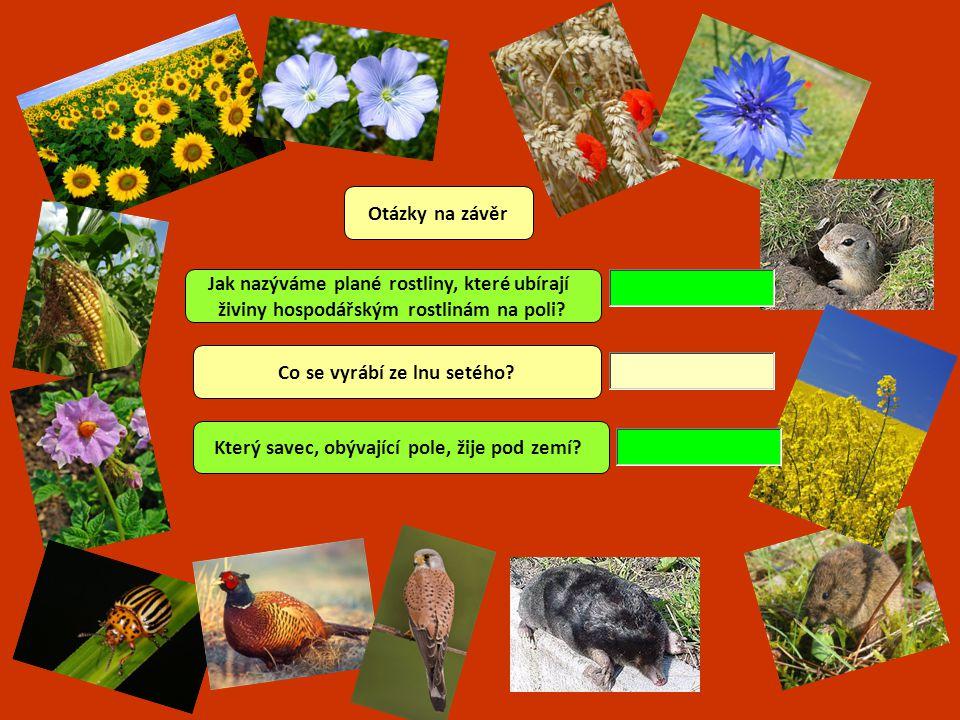 Jak nazýváme plané rostliny, které ubírají