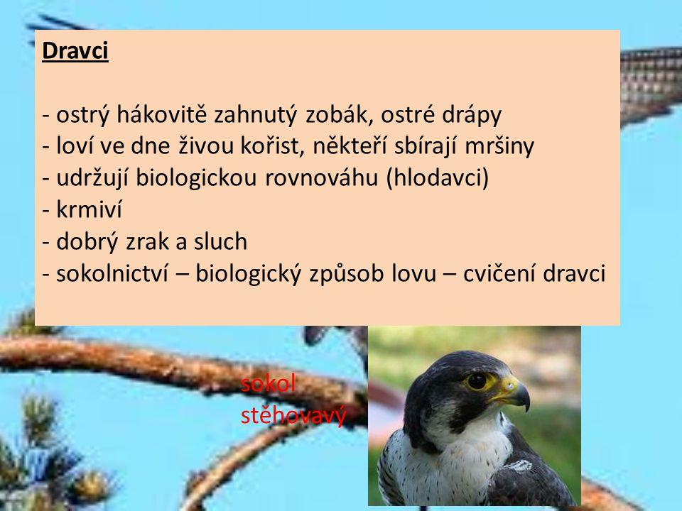 Dravci - ostrý hákovitě zahnutý zobák, ostré drápy. - loví ve dne živou kořist, někteří sbírají mršiny.