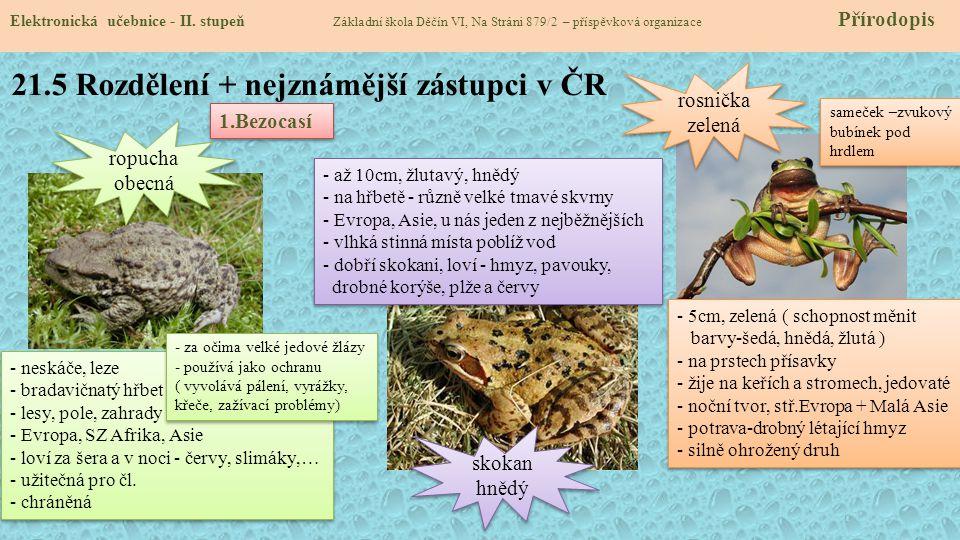 21.5 Rozdělení + nejznámější zástupci v ČR