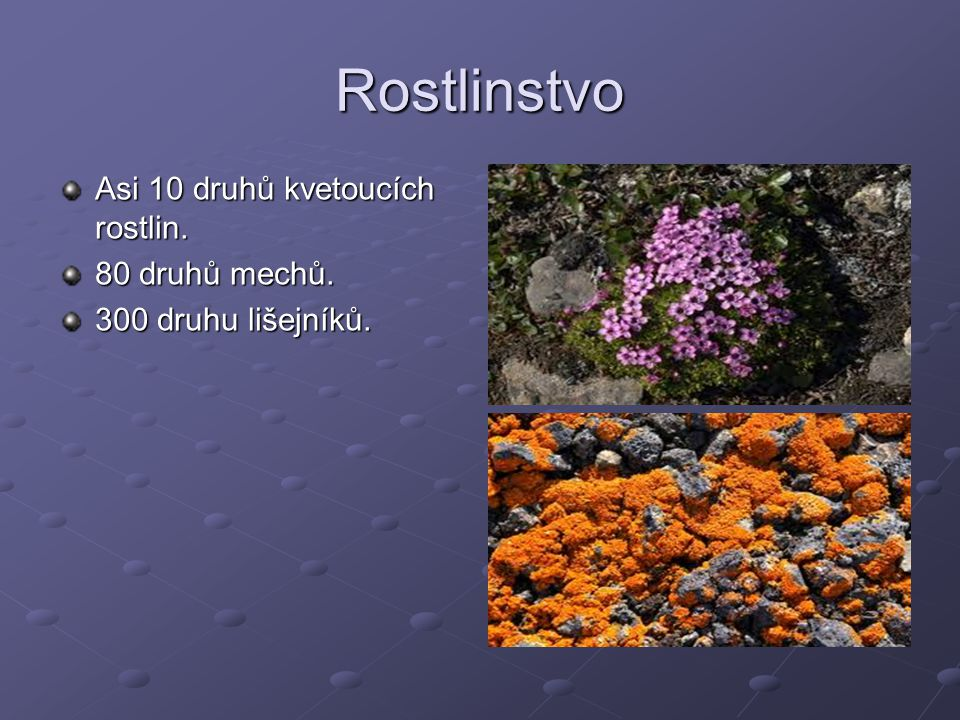 Rostlinstvo Asi 10 druhů kvetoucích rostlin. 80 druhů mechů.
