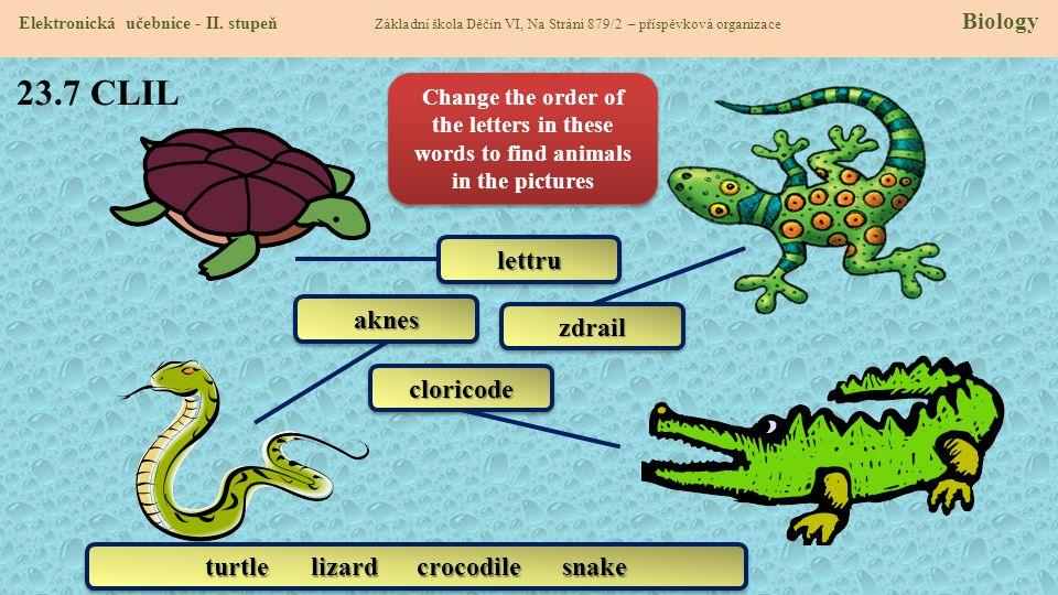 turtle lizard crocodile snake
