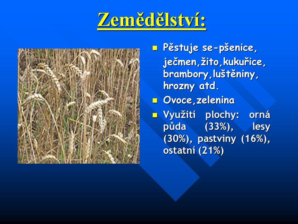 Zemědělství: Pěstuje se-pšenice,