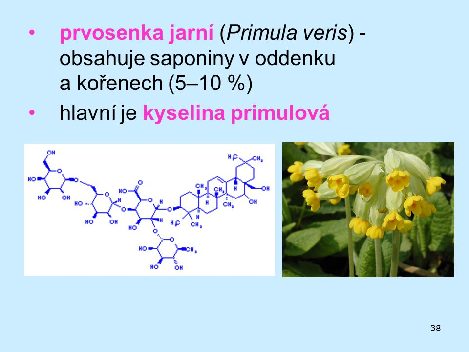 prvosenka jarní (Primula veris) - obsahuje saponiny v oddenku a kořenech (5–10 %)