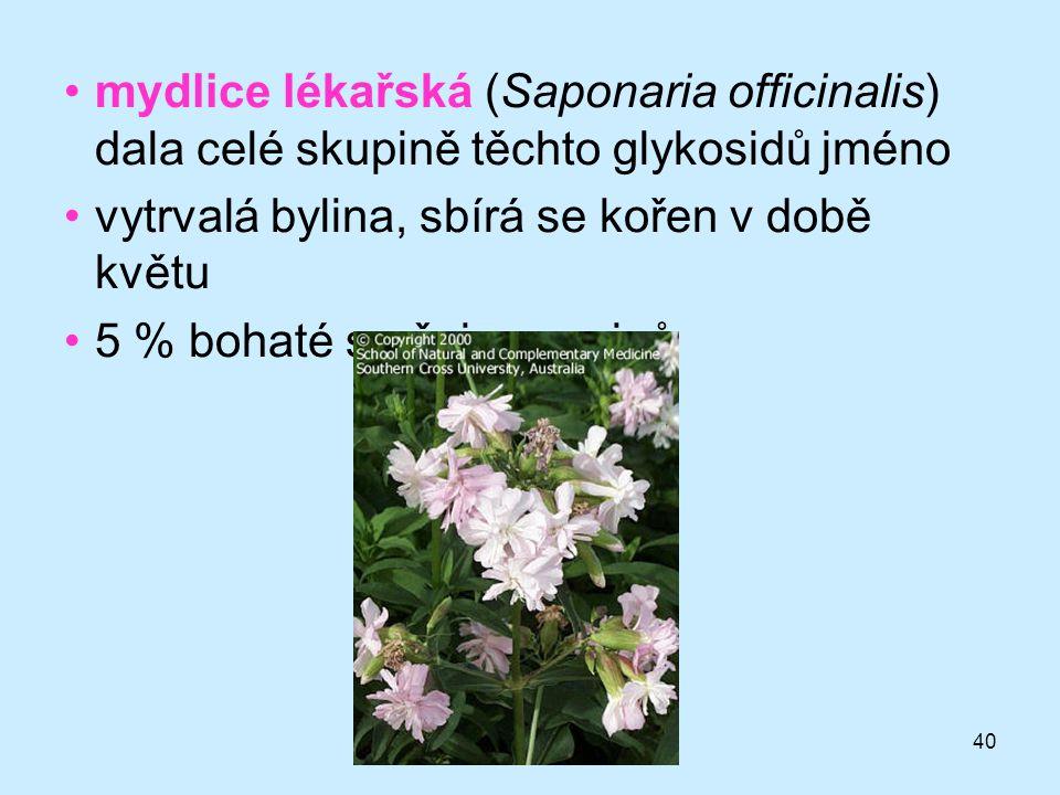 mydlice lékařská (Saponaria officinalis) dala celé skupině těchto glykosidů jméno