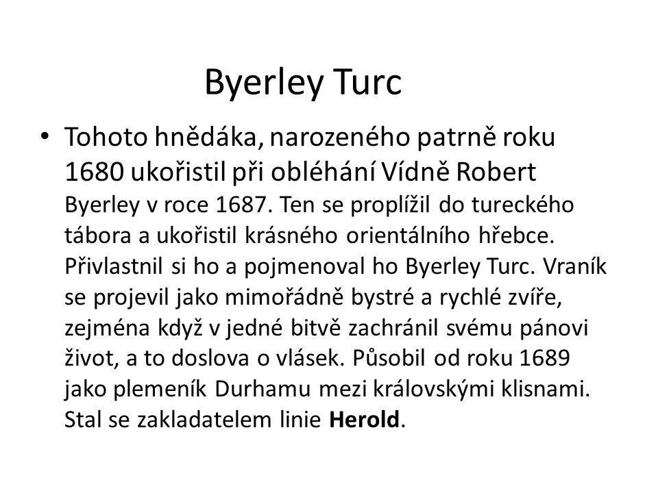 Byerley Turc