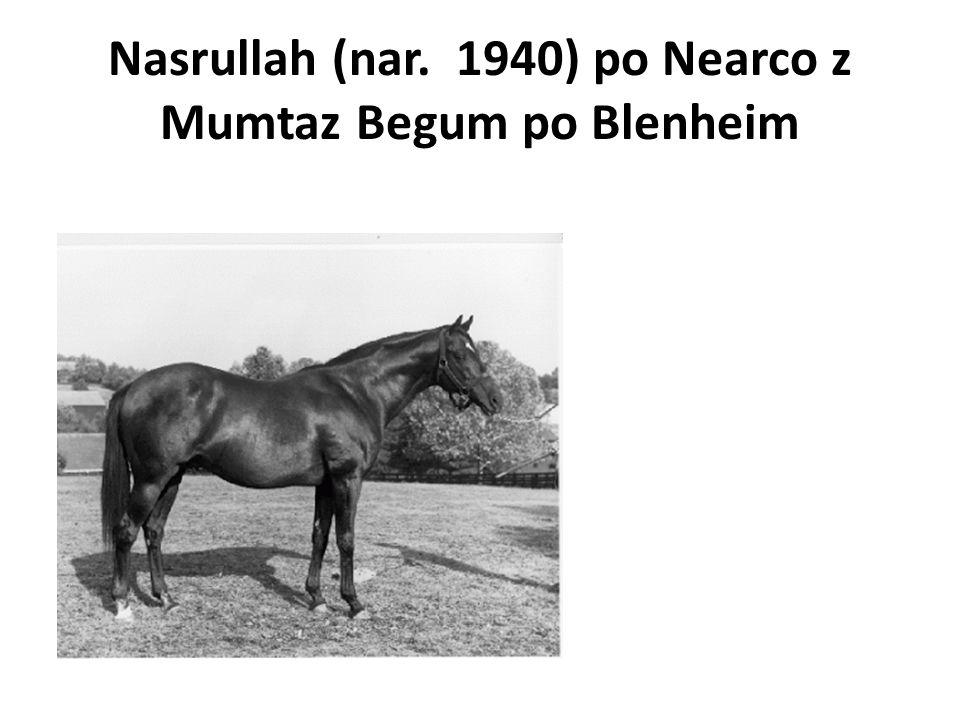 Nasrullah (nar. 1940) po Nearco z Mumtaz Begum po Blenheim