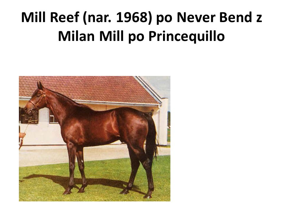Mill Reef (nar. 1968) po Never Bend z Milan Mill po Princequillo