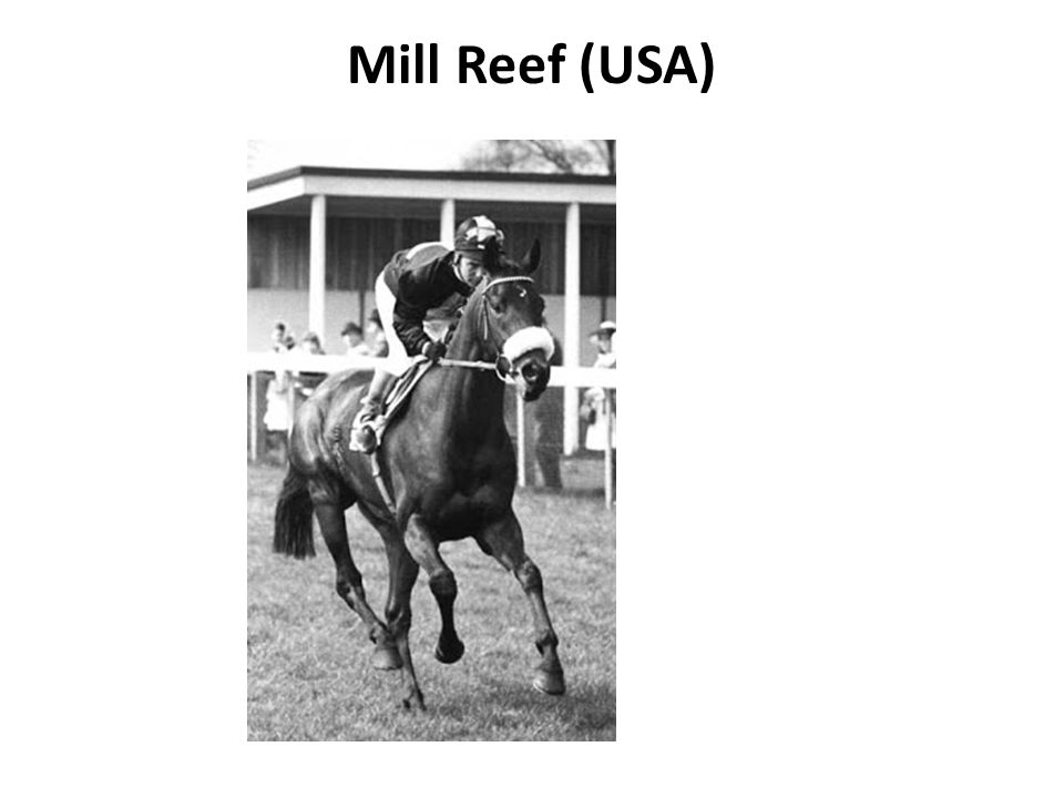 Mill Reef (USA)